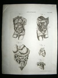 Anatomy Print: C1875 Copper Plate, Antique Print